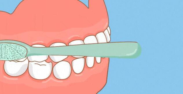 外侧区刷牙